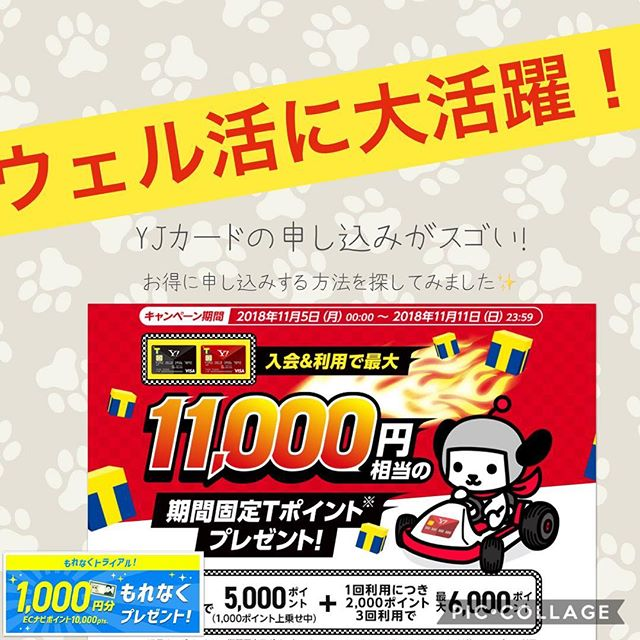 ウェル活で大活躍のyahoo!Japanカード祭りが止まらない️!