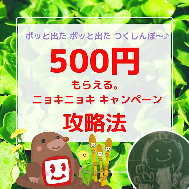 ︎500円ポッと出たECナビ〜♪春待ちニョキニョキキャンペーン